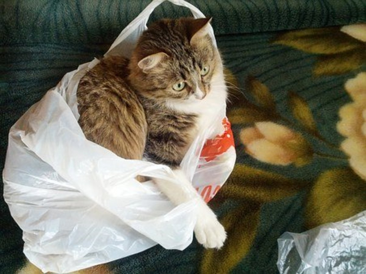 Let The Cat Out Of The Bag - Idiom