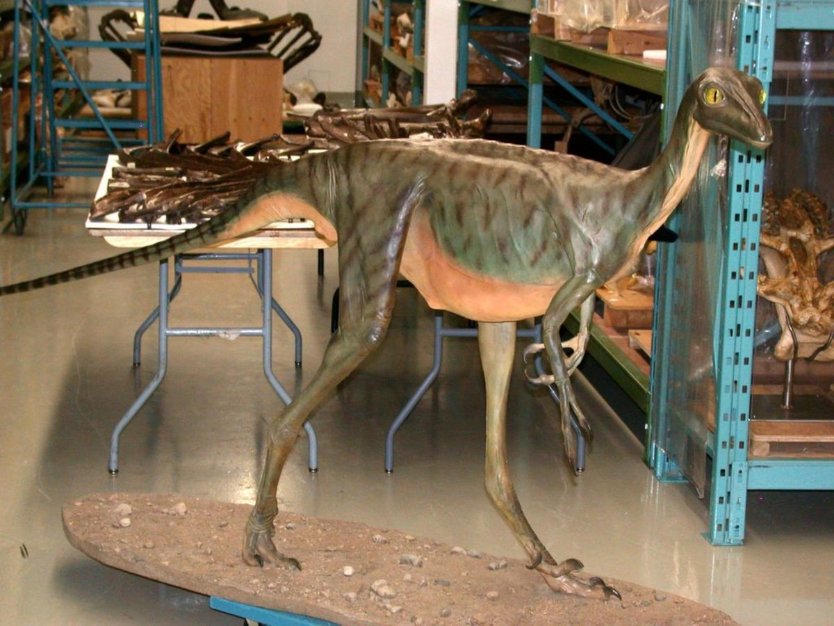 Outdated restoration of Troodon/Stenonychosaurus at the Canadian Museum of Nature in Canada, c. 1982.