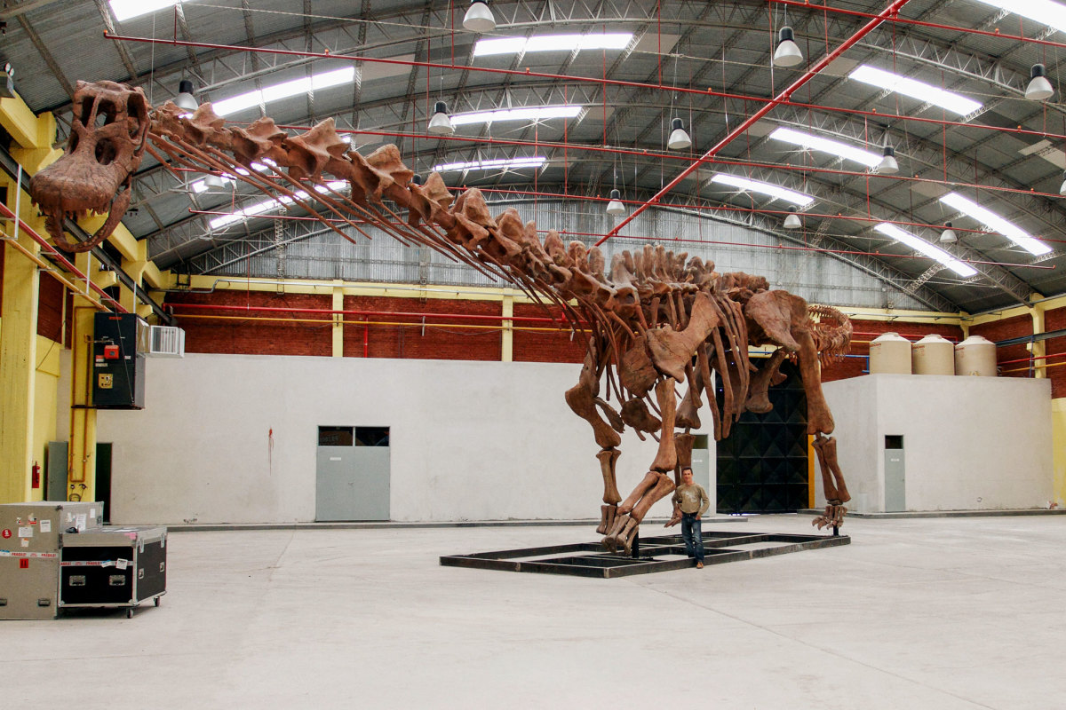 Patagotitan skeletal mount in a warehouse with a man for scale. This mount was on display at the American Museum of Natural History in New York for a year, and will soon be installed at the Field Museum in Chicago.