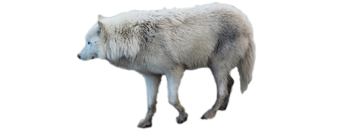 grigio-the-furry-angel-of-st-john-bosco