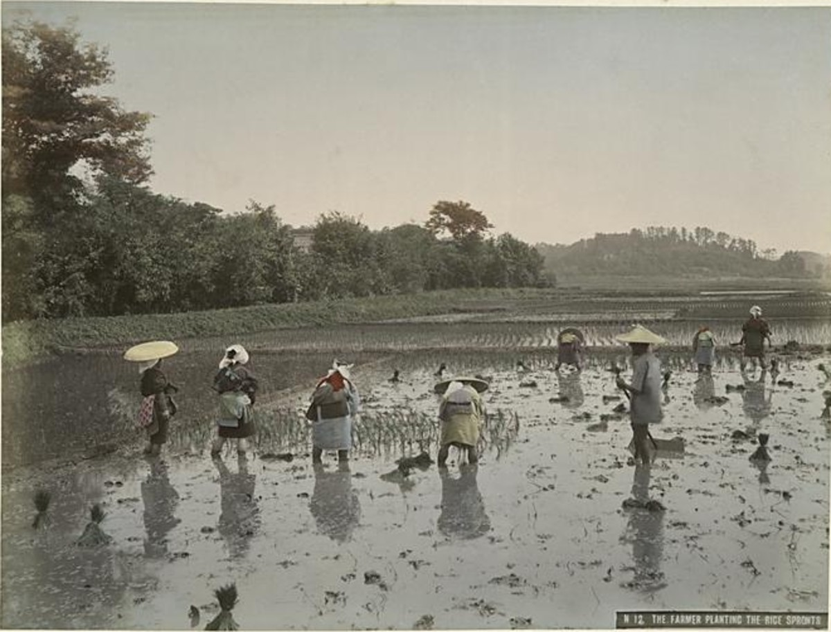 Japanese rice planting ~1890 : hard and difficult work.