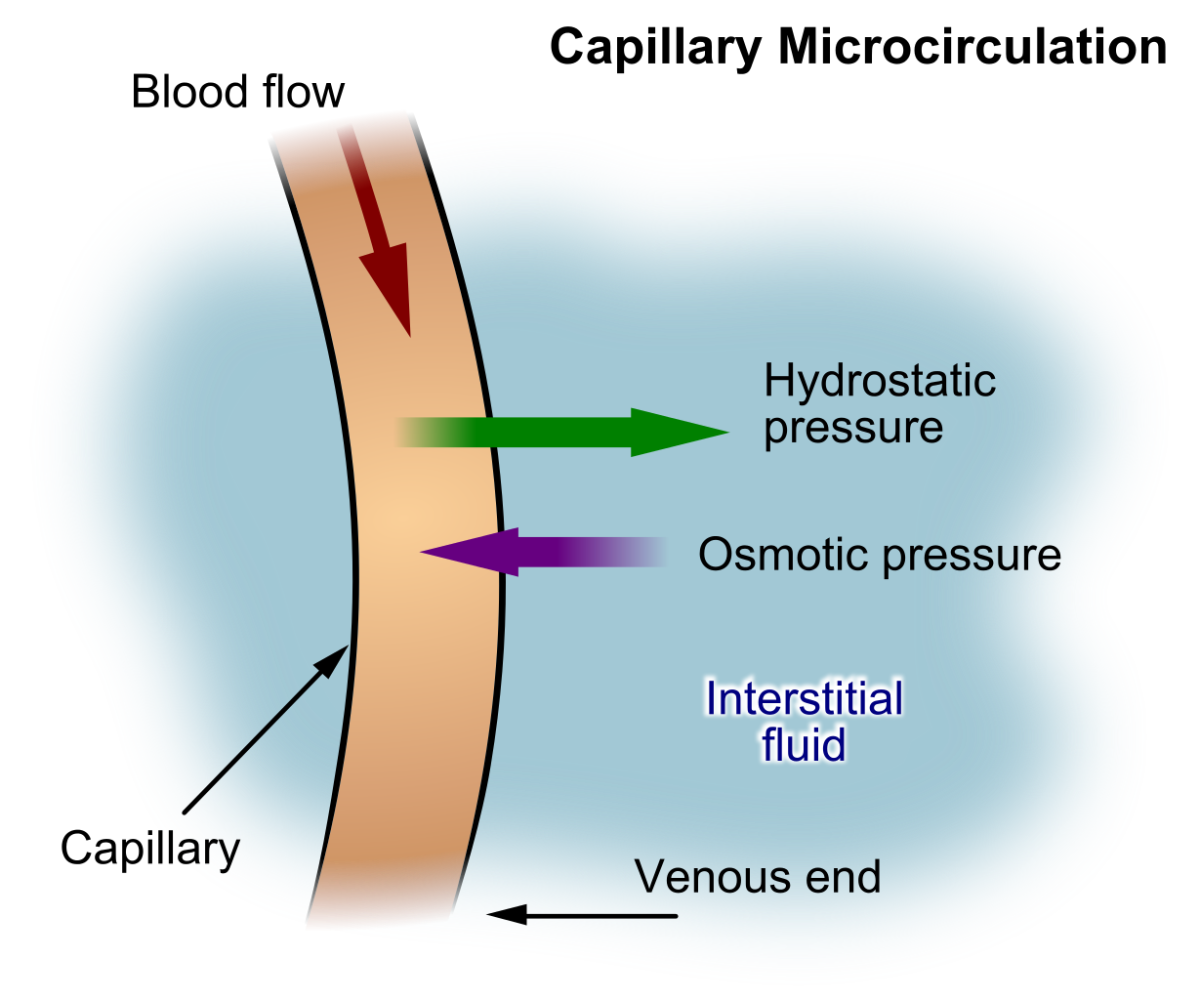 Fluid movement out of and into a capillary