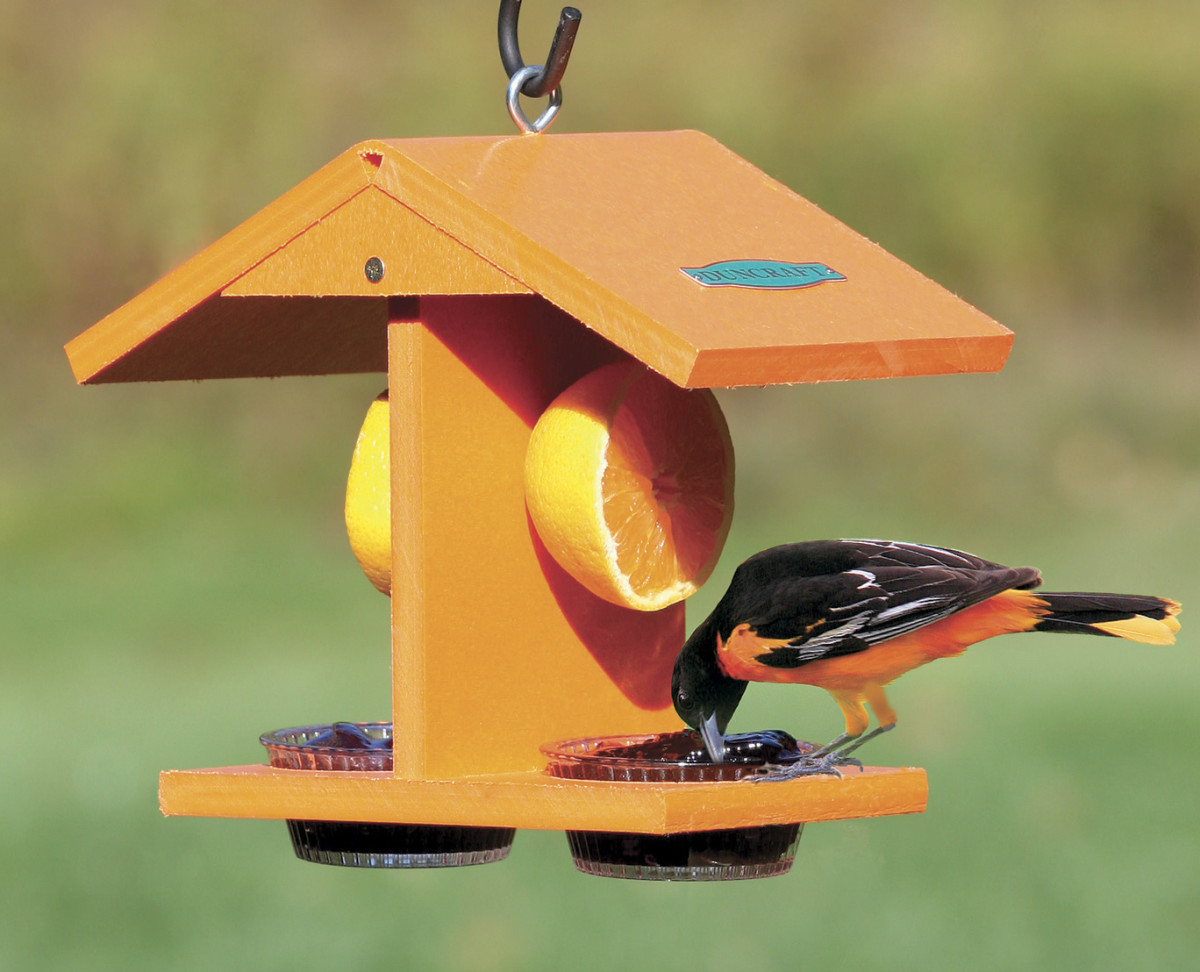 A feeder designed specifically for orioles.  We found so many different designs, it was very hard to choose which one to use for this article. Almost all of them had a place for both oranges and a grape jelly mixture.