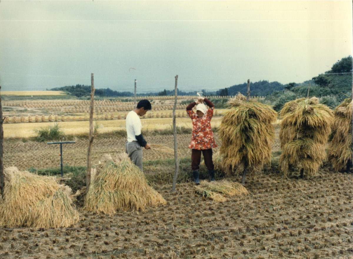 Farming still remained materially much the same until decades after the Second World War, as shown by this picture from the 1950s, but the structure in which it was placed had dramatically changed.