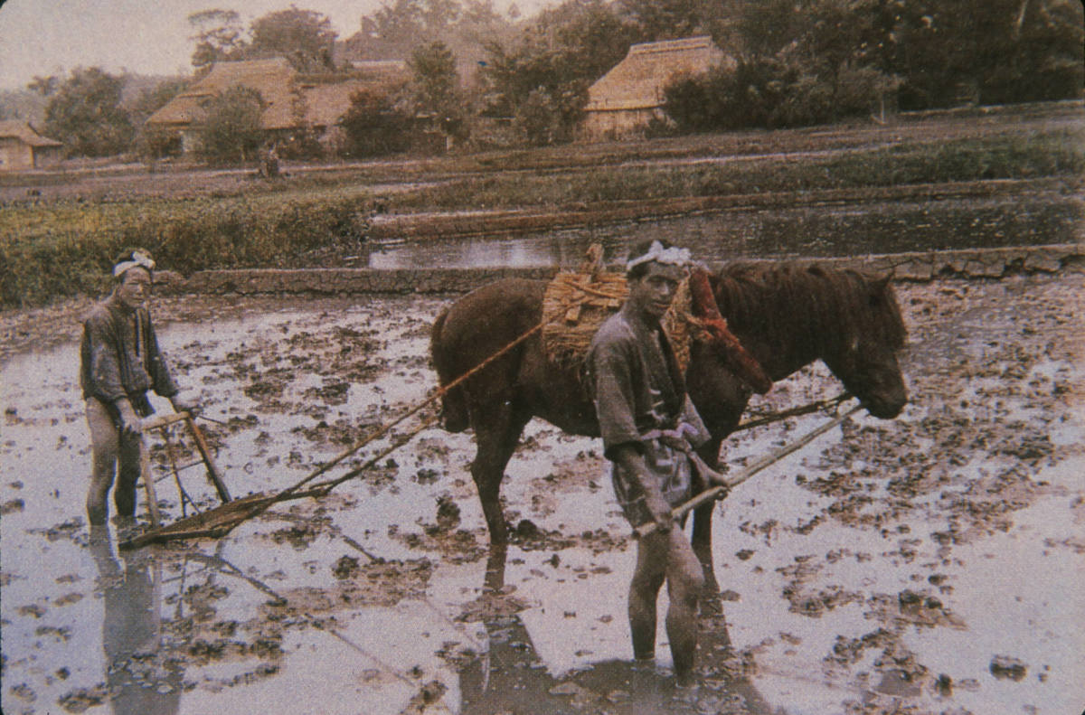 Japanese farmers at work.