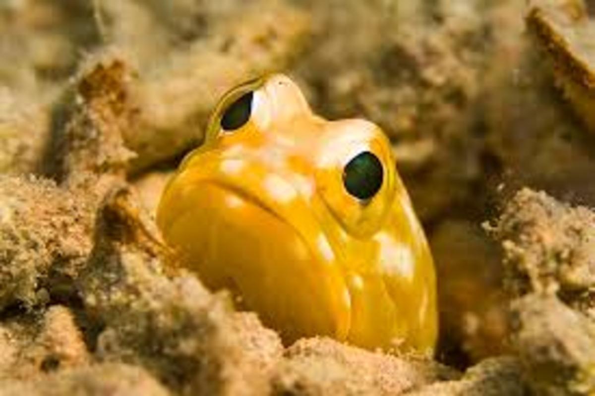 10-weirdest-deep-sea-creatures