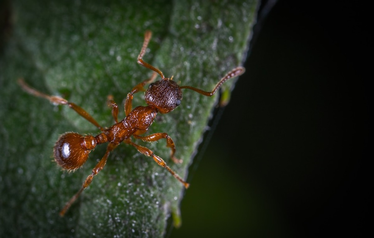 Complete Guide on Ants Lifespan
