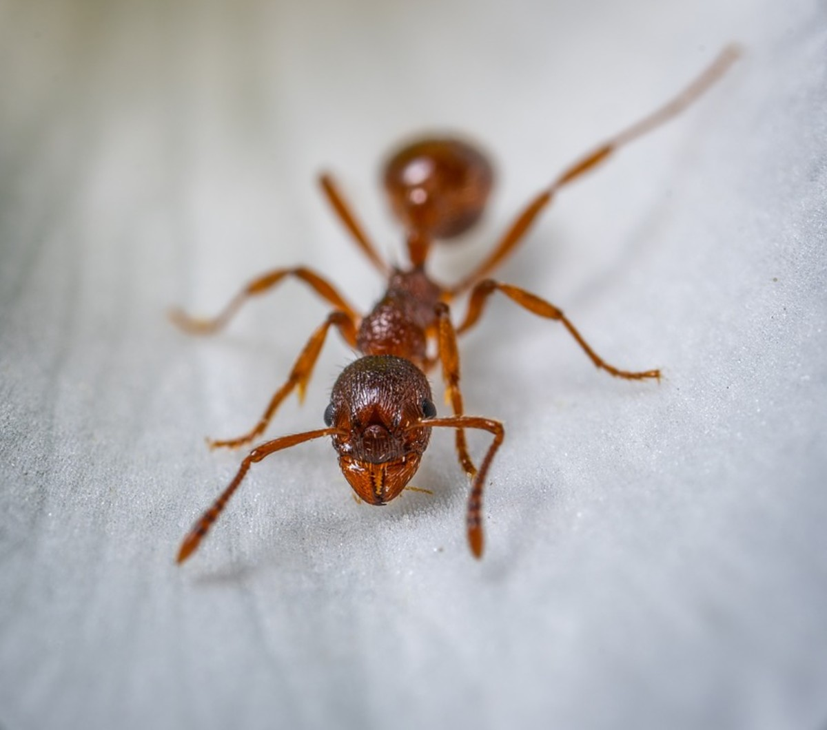 The Lifespan of the Most Common Ant Species