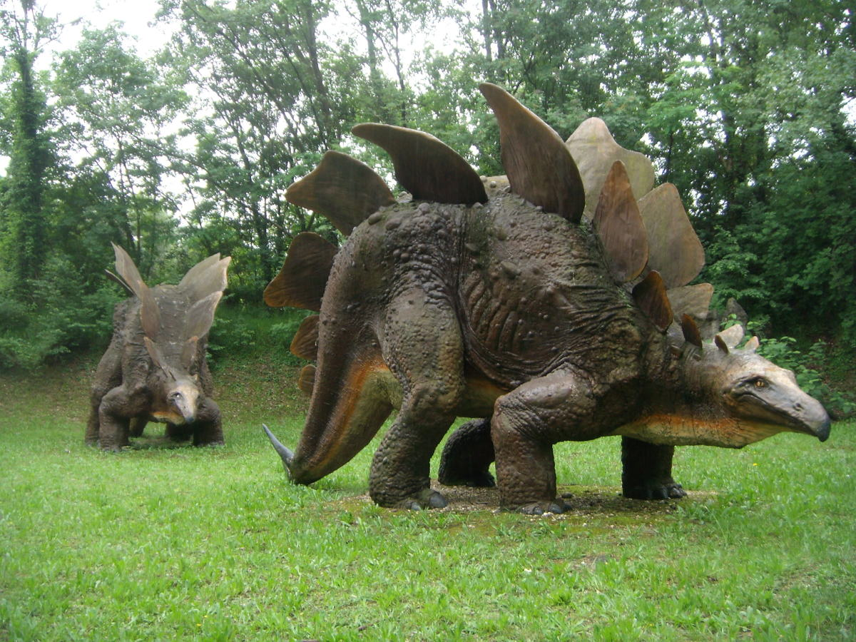 Adult and juvenile Stegosauruses in an Italian nature life park.