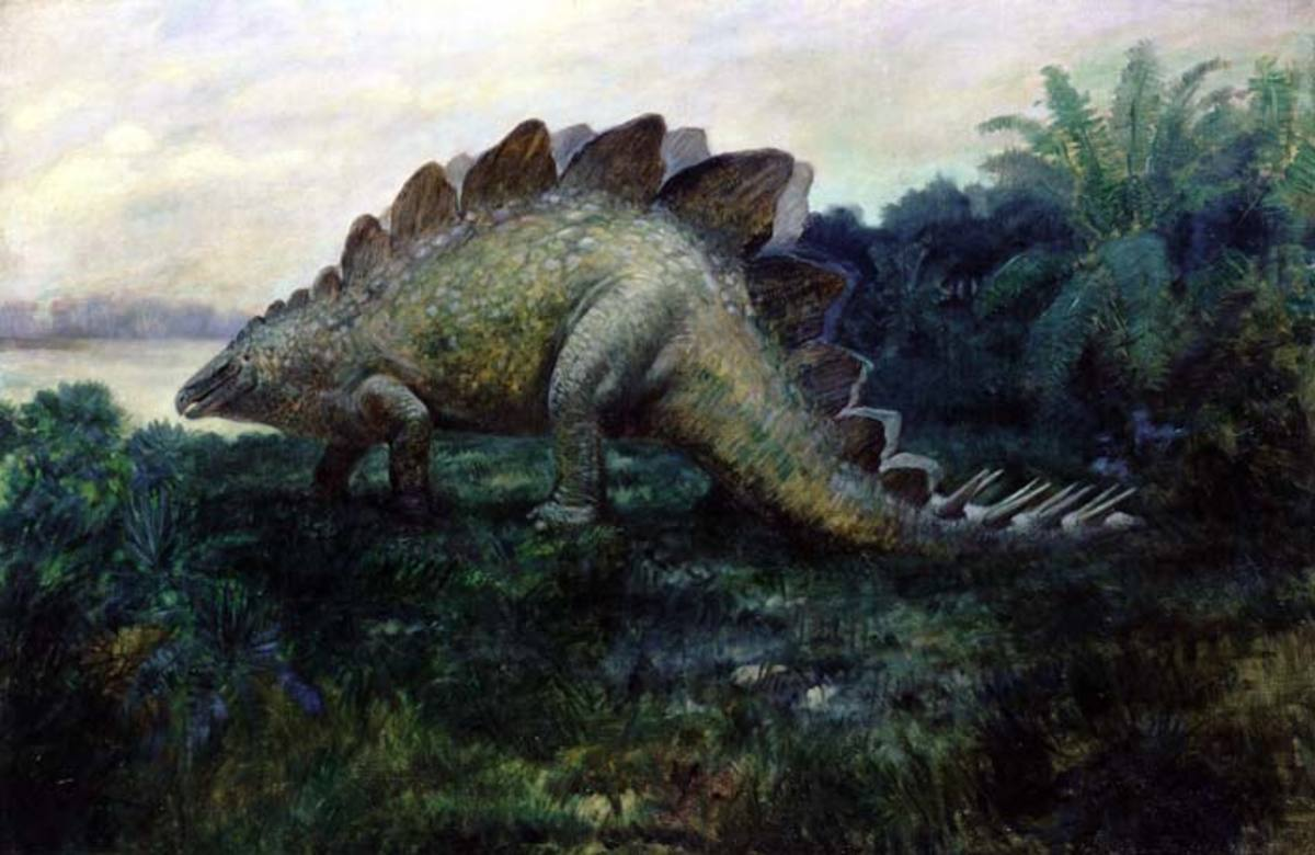 Life restoration of Stegosaurus ungulatus Marsh. By Charles R. Knight, 1901. After F.A. Lucas.