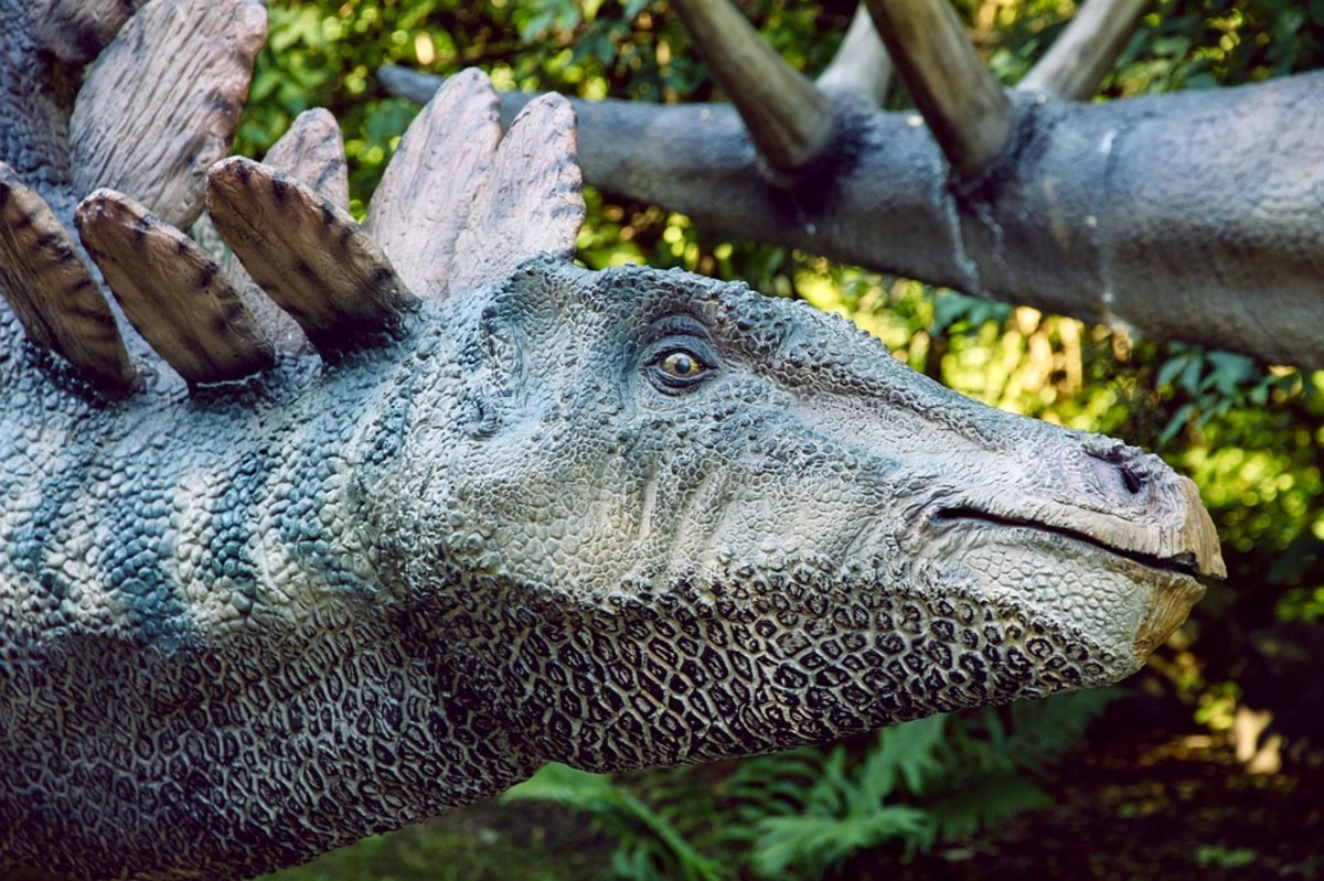 A model of a Stegosaurus in DinoPark.