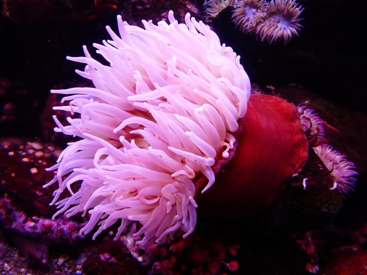 Unidentified anemone from Pexels
