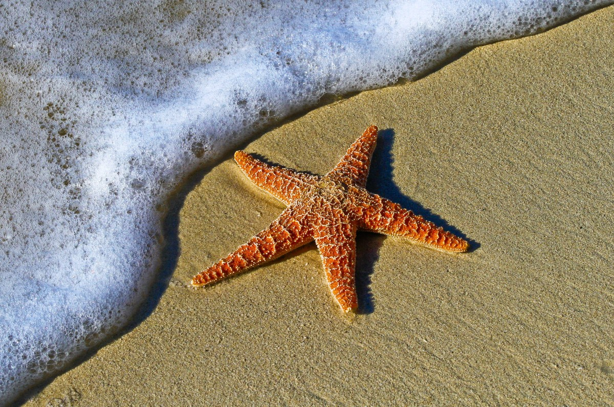 Unidentified starfish from Pexels
