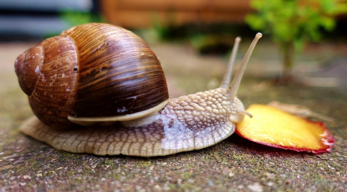 Unidentified land snail from Pixabay