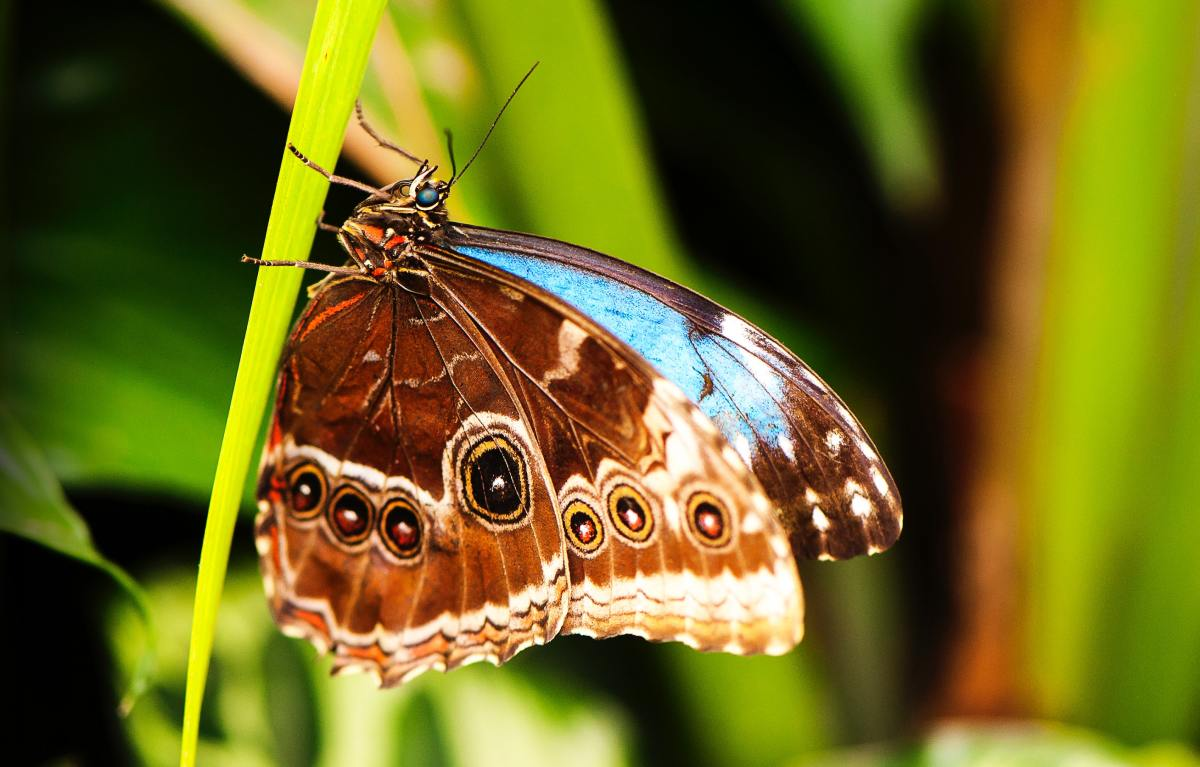 Invertebrate Animals: Butterflies