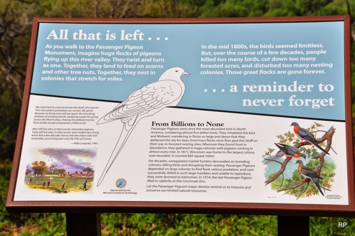 Wisconsin Society for Ornithology members erected this public monument in Wyalusing State Park in Wisconsin to keep the memory of the passenger pigeon alive.