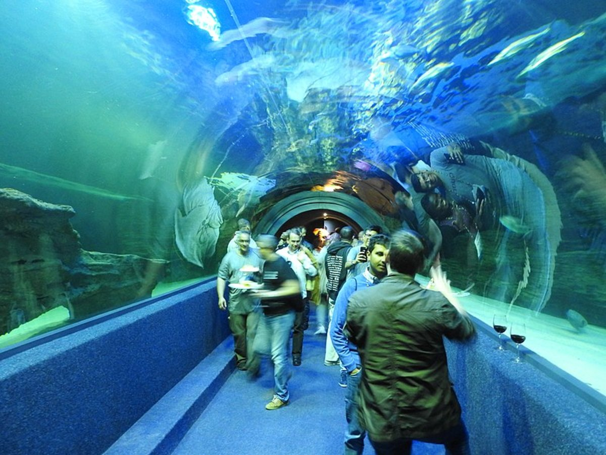 A fish tunnel at the Two Oceans Aquarium in South Africa. This is one of two sites in the world that breeds the endangered seahorse.