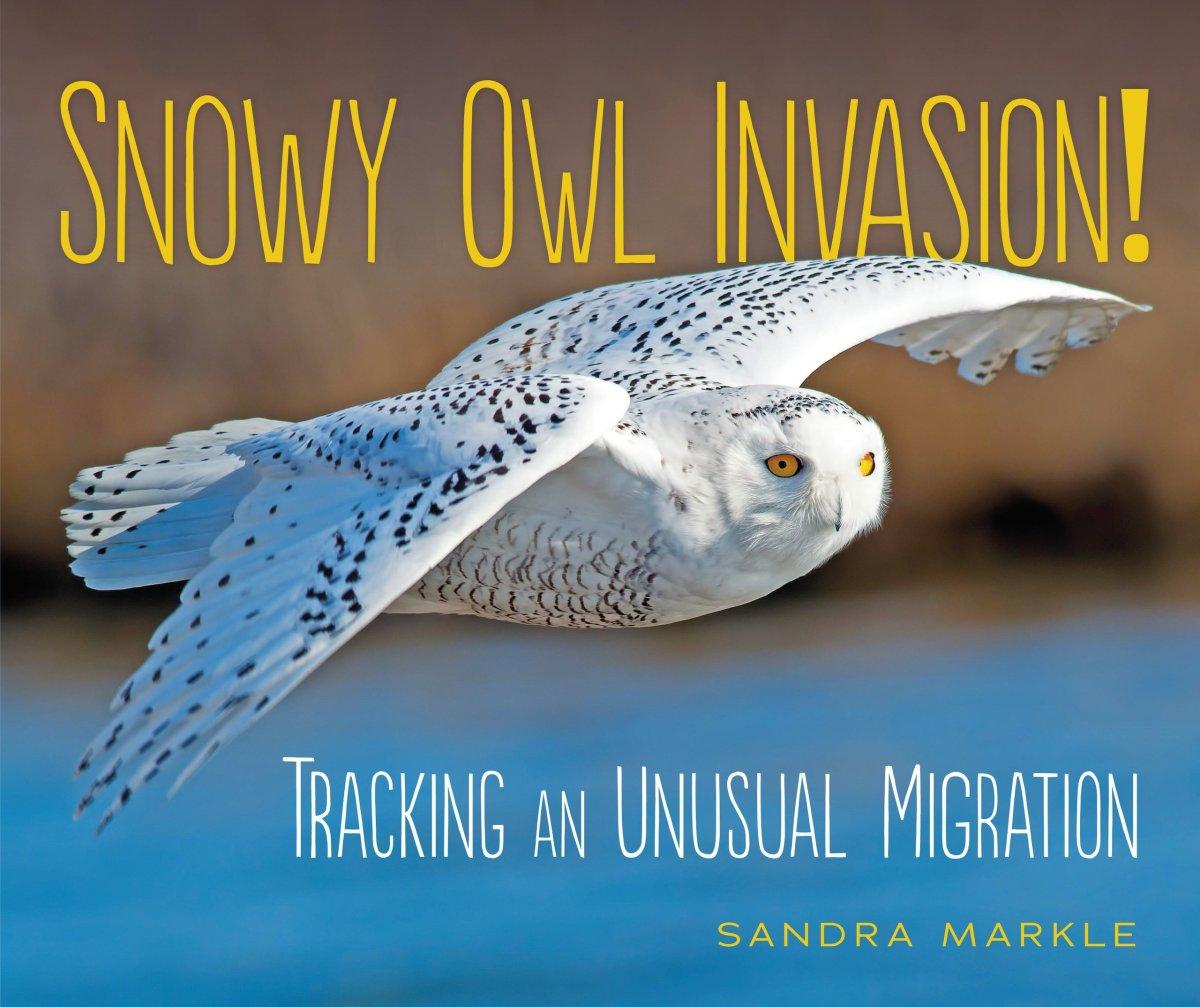 Snowy Owl Invasion by Sandra Markle