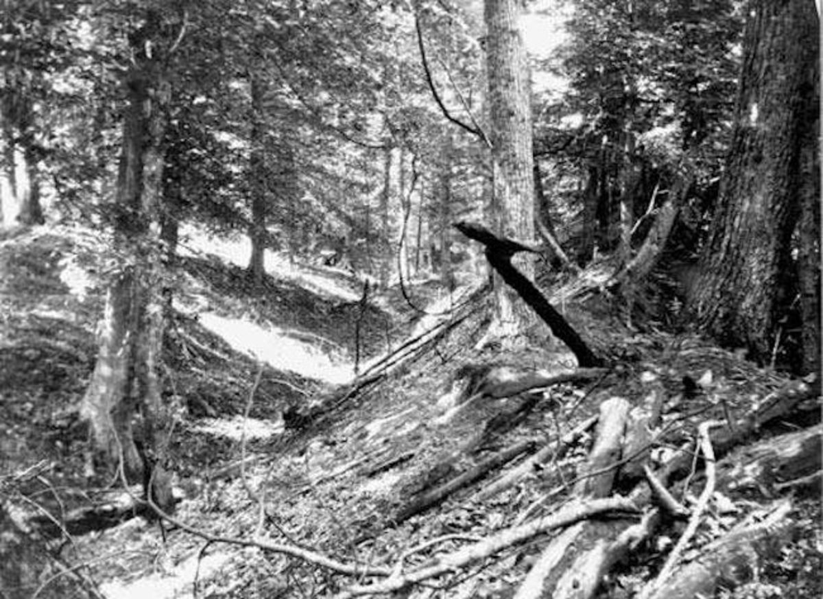 Trench east of Reelfoot lake on the Chickasaw Buffs in Tennessee caused by the Earthquakes