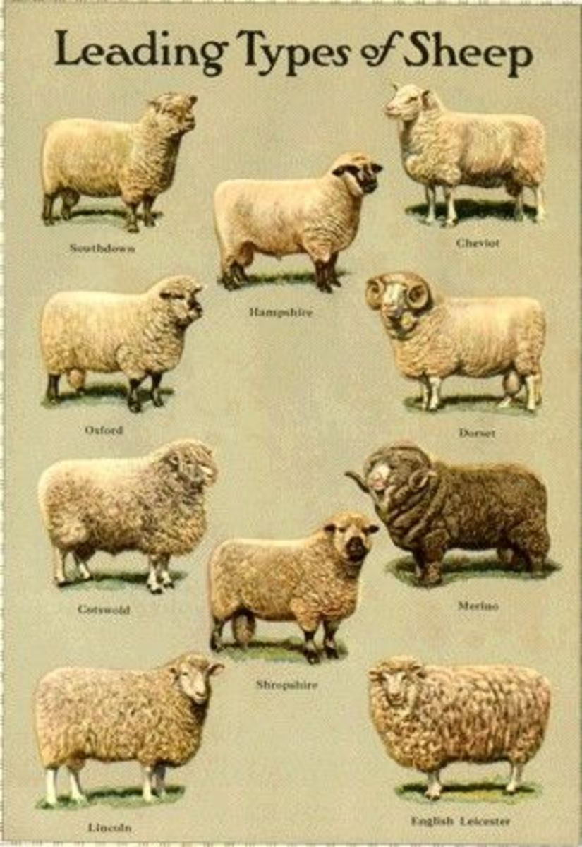 wool-its-sources