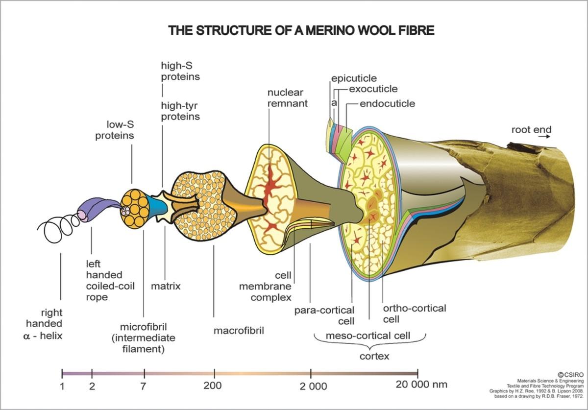 Wool fiber consists of the cuticle, cortex, and medulla.