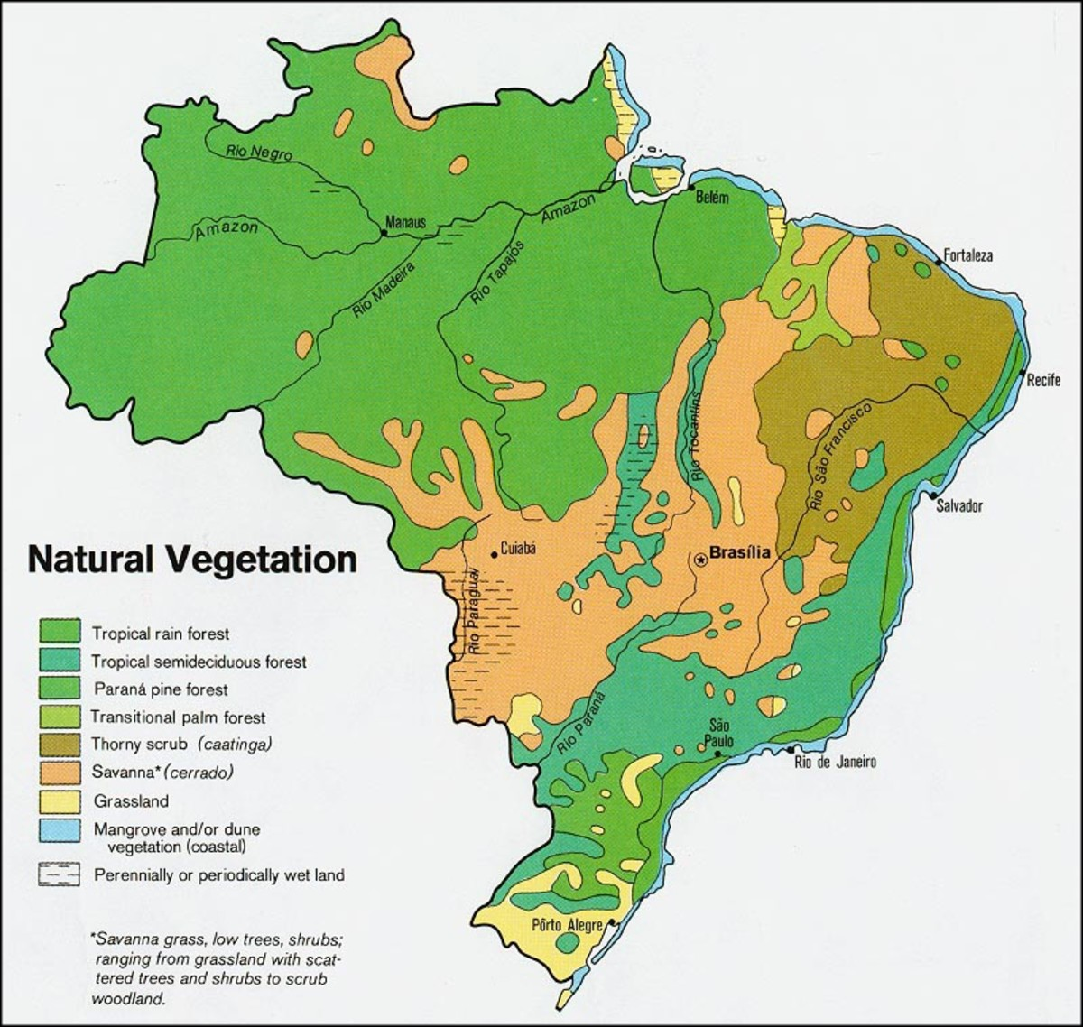 Vegetation in Brazil