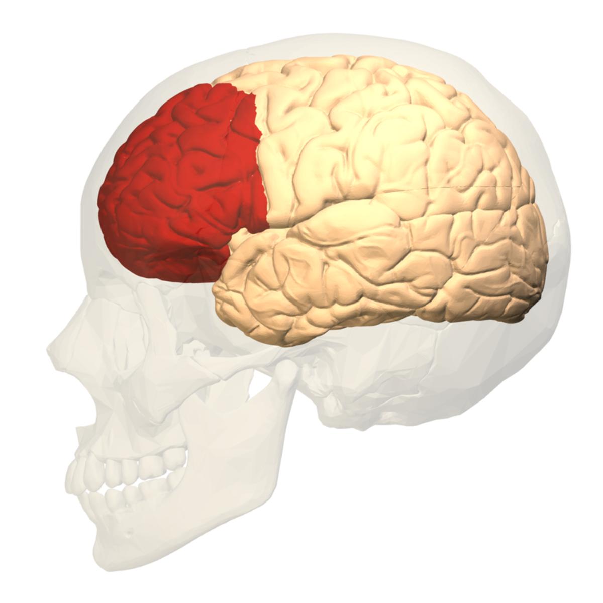 Pre-frontal cortex