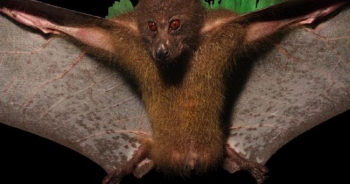 Montane monkey-faced bat