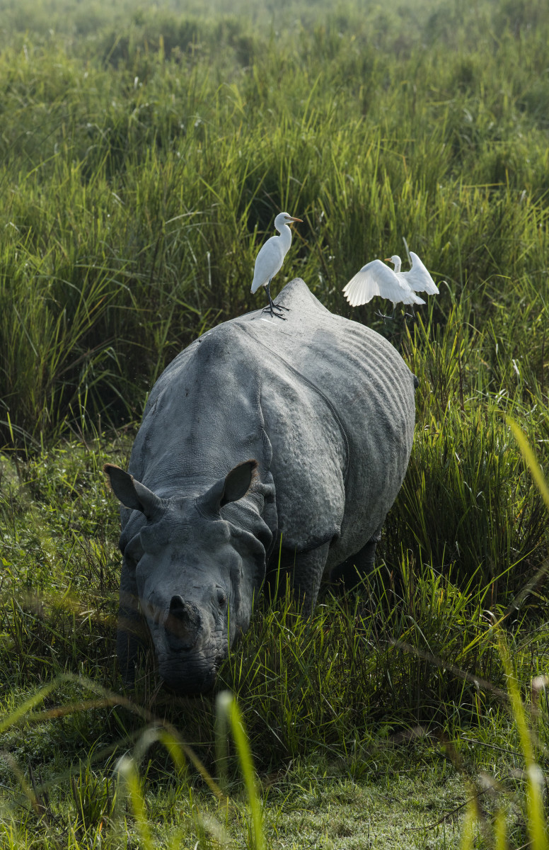 top-10-facts-about-rhinoceroses