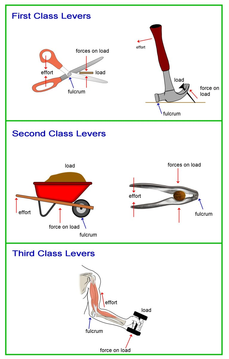 The three classes of levers.
