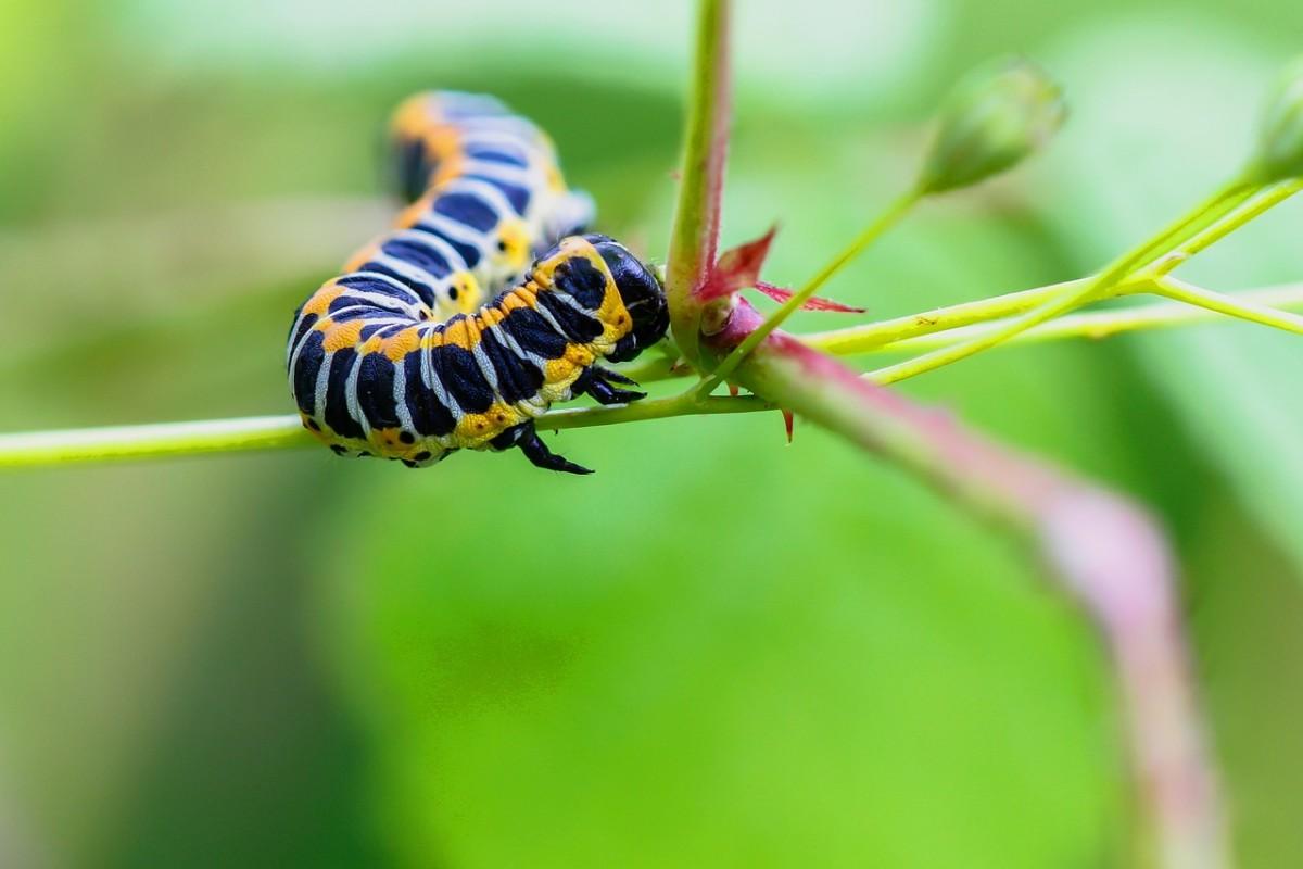 caterpillar-q-and-a