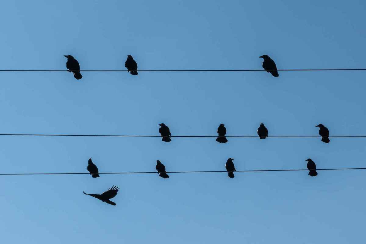 Birds can sit on power lines without being electrocuted because electricity can't flow through their bodies.