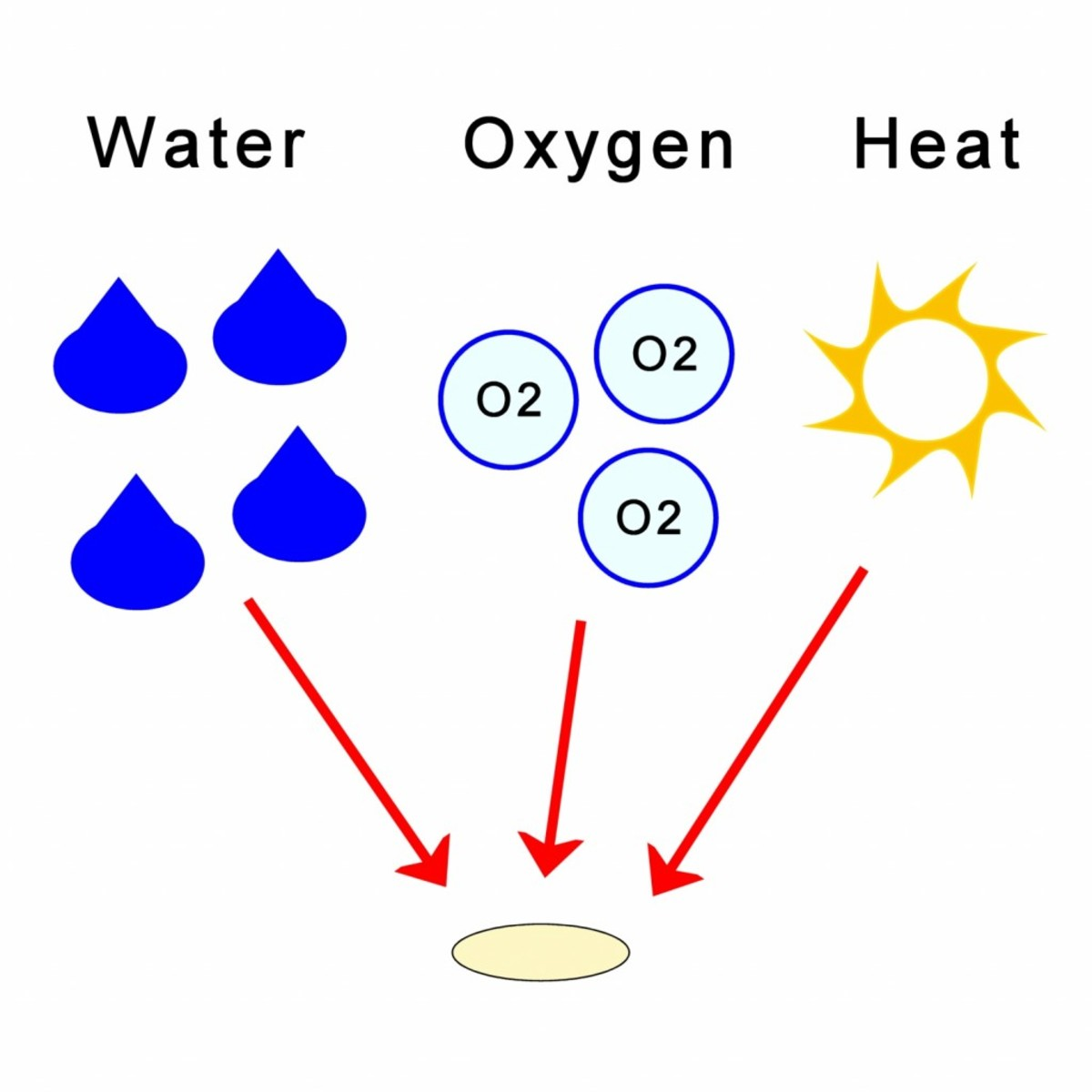 A seed contains information in the form of a chemical called DNA. This tells the seed how to grow. Seeds need oxygen, water and heat so that they can germinate and start to grow.