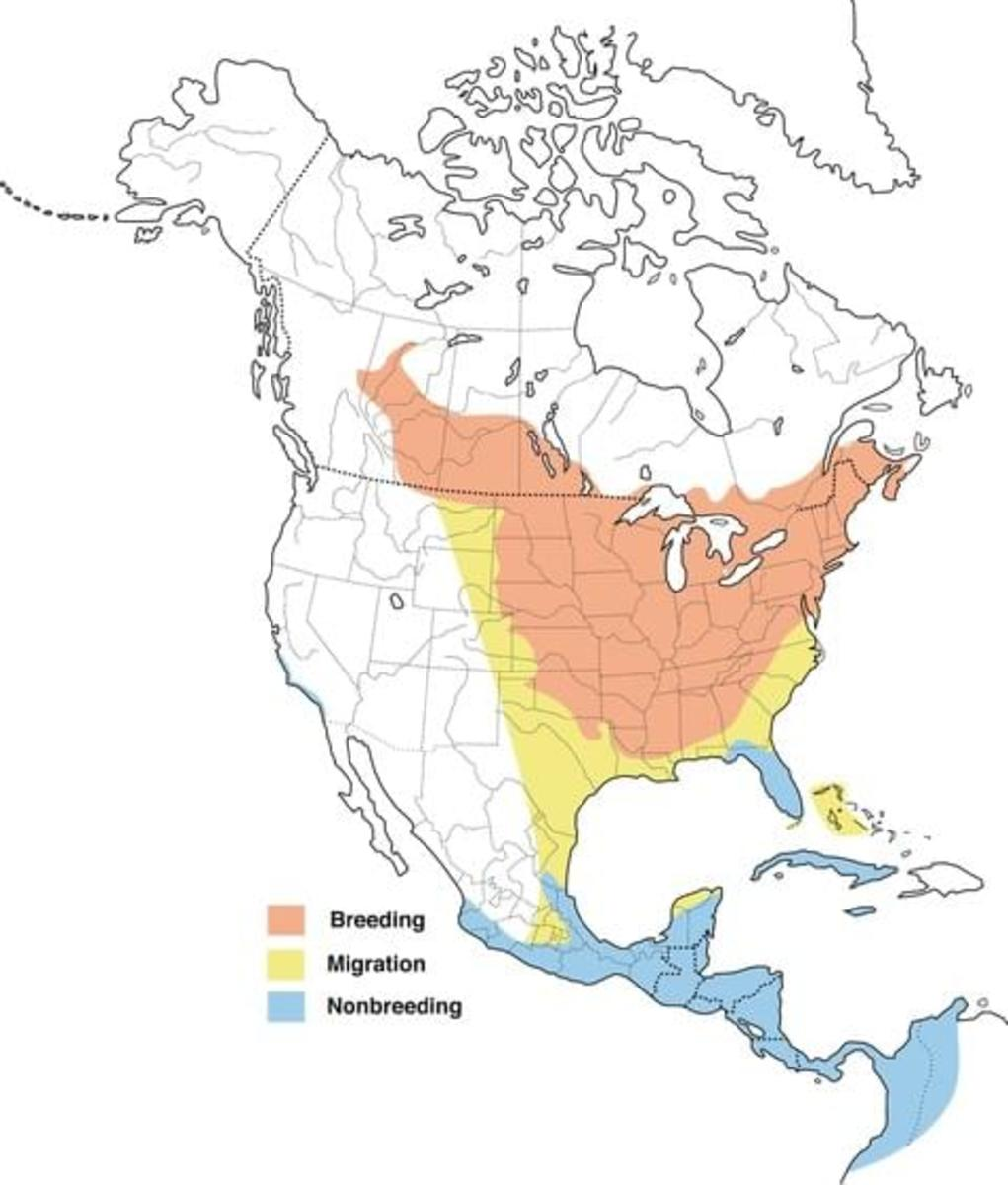 Map showing the range of the Baltimore Oriole birds in North America.