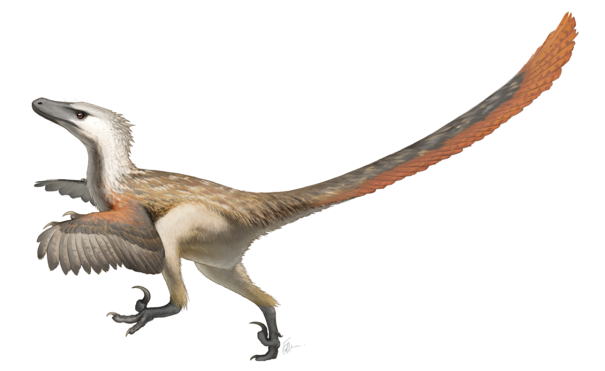 Scientific depiction of Velociraptor