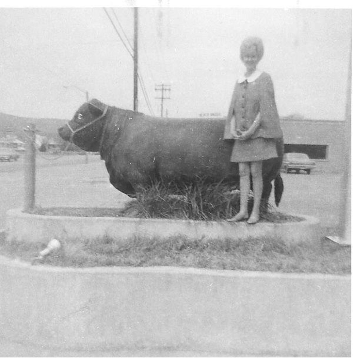 Ann Parker standing by the Black Angus Bull.