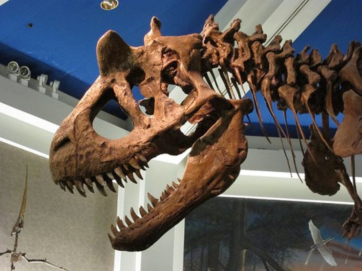 Carnotaurus skull, showing its horns.