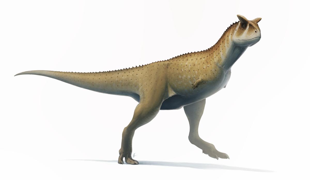 Carnotaurus reconstruction.