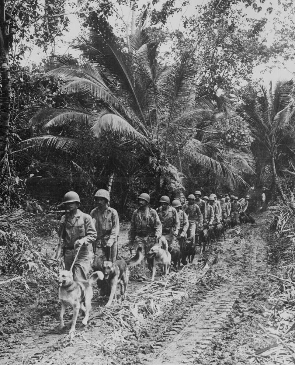 Raider Battalion with War Dogs.