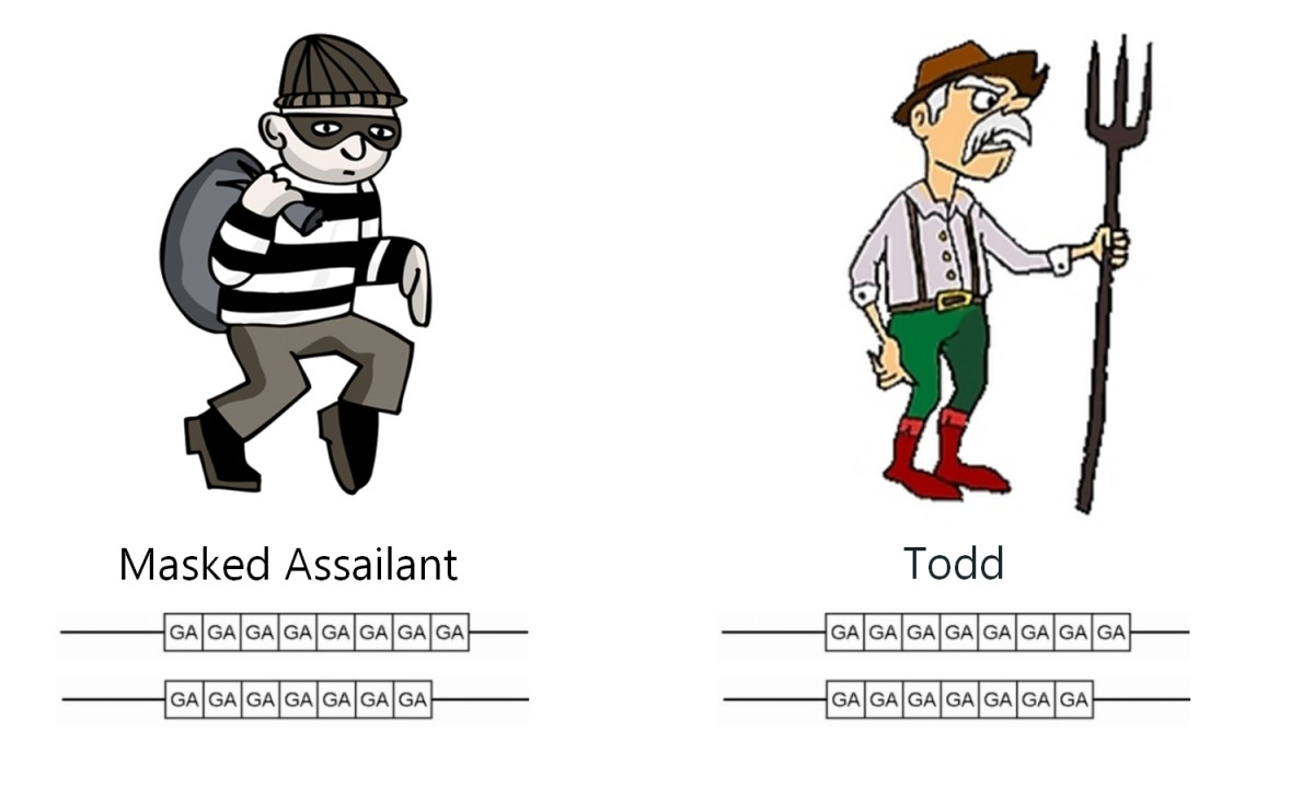 DNA Profiles of the Masked Assailant and Todd