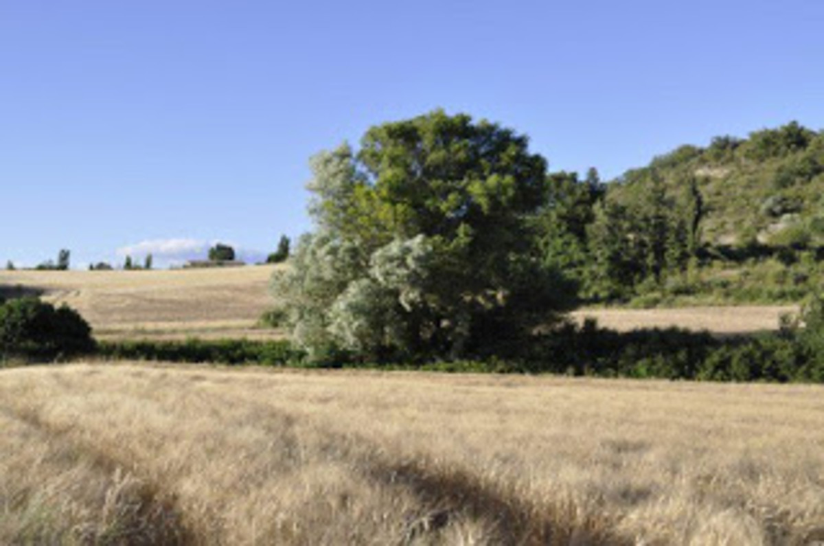 Typical landscape near Manosque, France as described into Giono's novels.