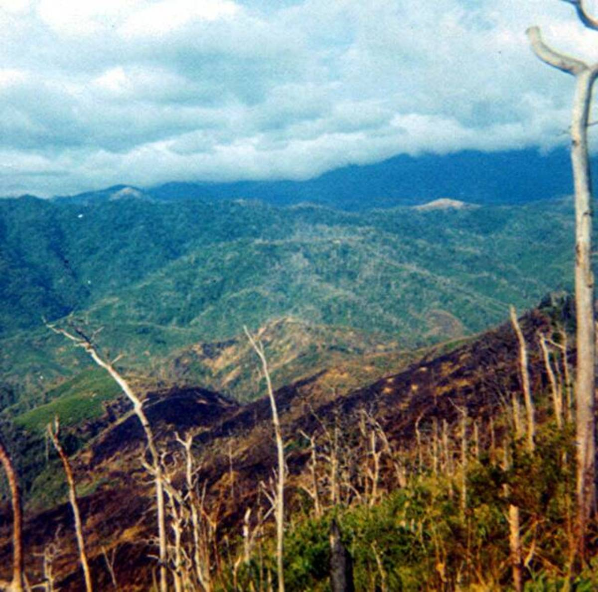 Looking north towards the DMZ from Mutter's Ridge. Signs of battle can be seen in the foreground.