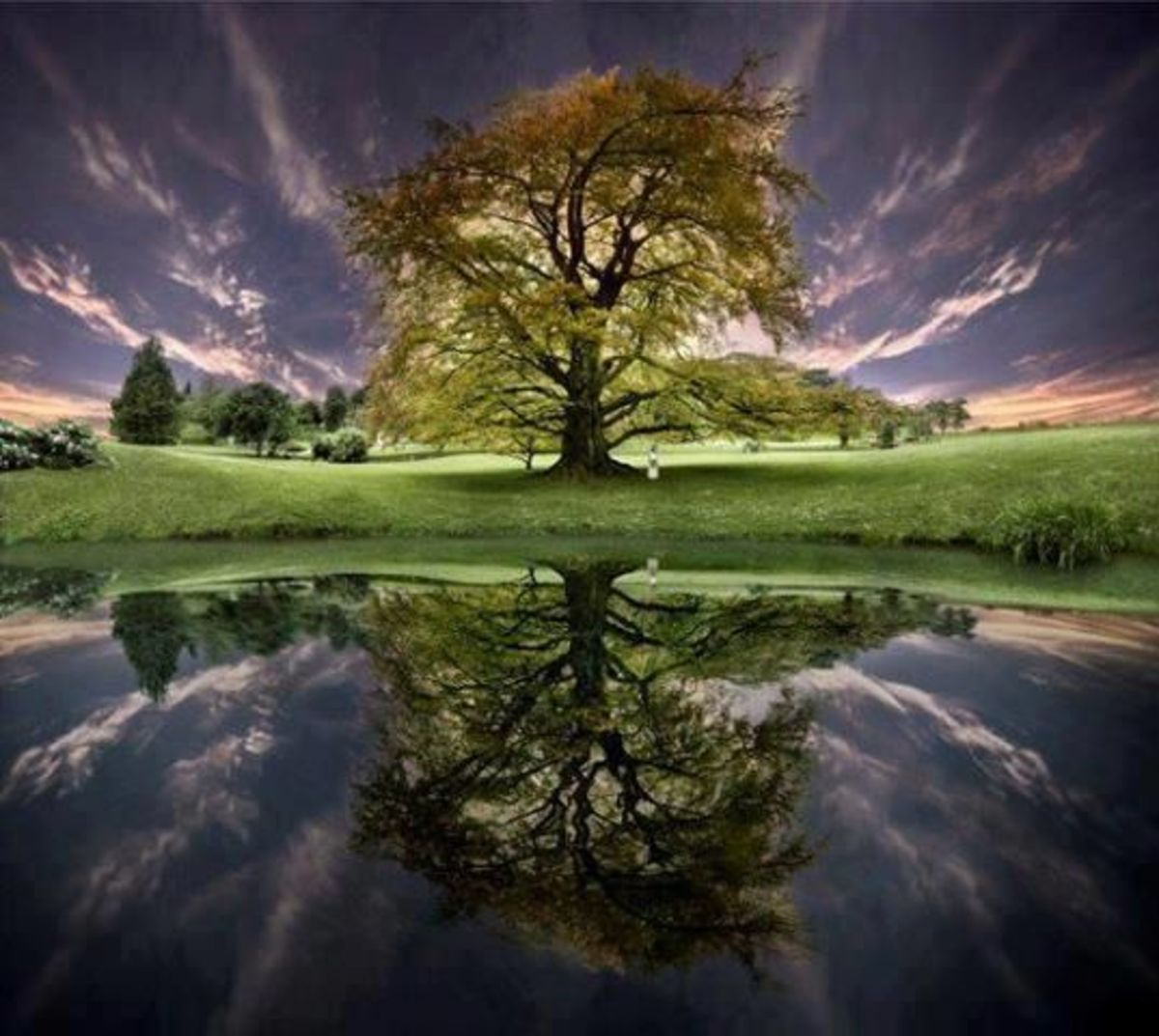"""""""like a tree planted by streams of water"""""""