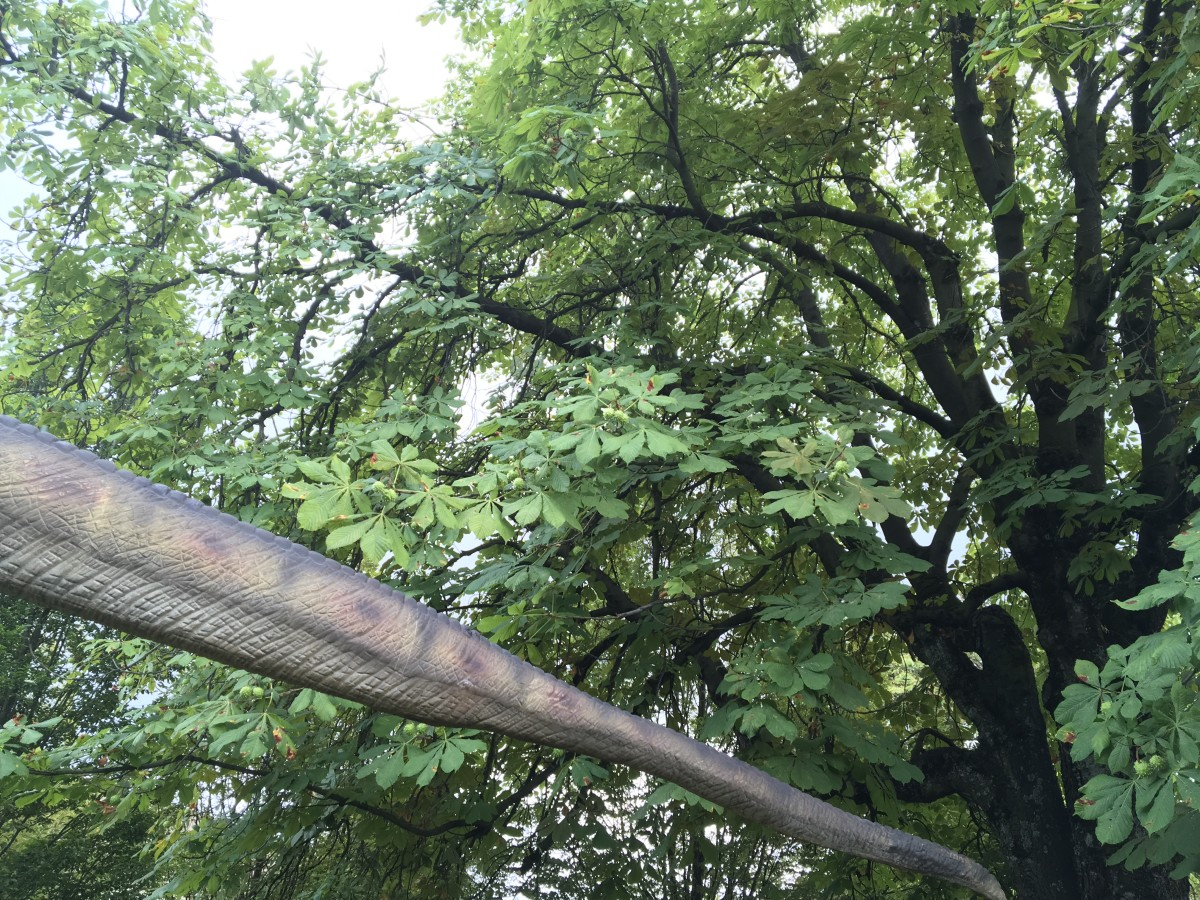 The tail of the T. rex model and the branches of a horse chestnut tree.