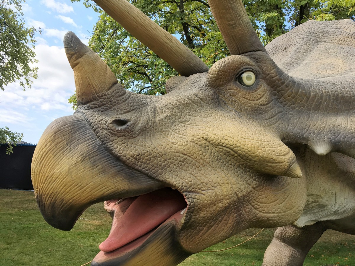 A side view of Triceratops