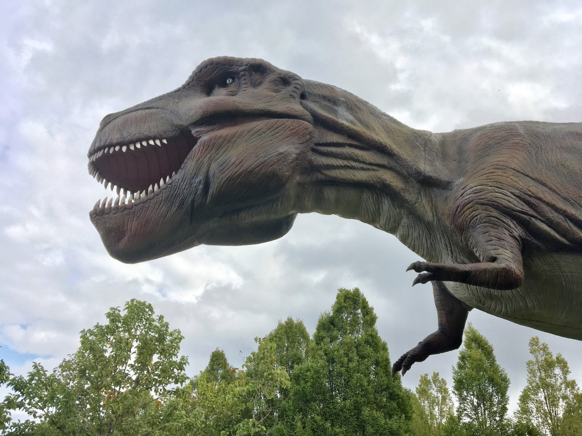 A close-up view of the head of theTyranosaurus rex model