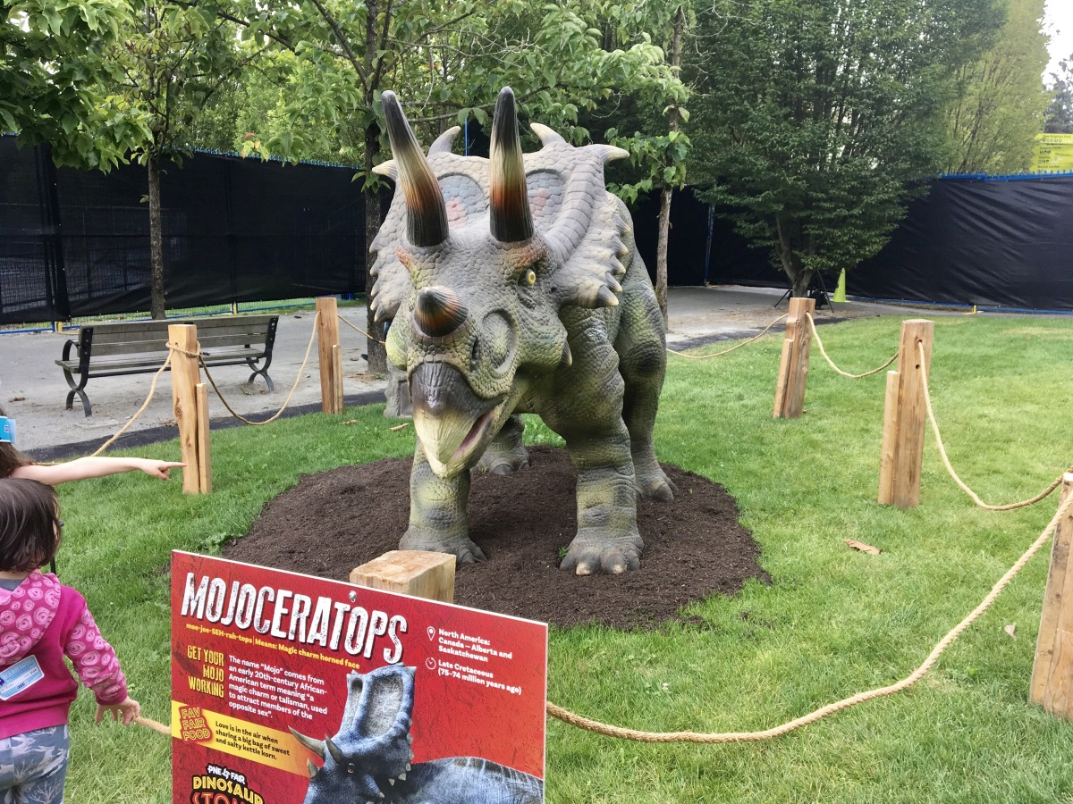Front view of Mojoceratops