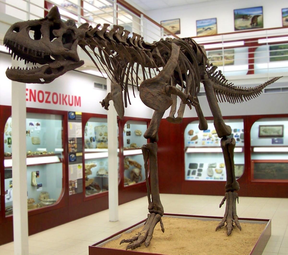 A skeletal cast of Carnotaurus in a Prague mueum