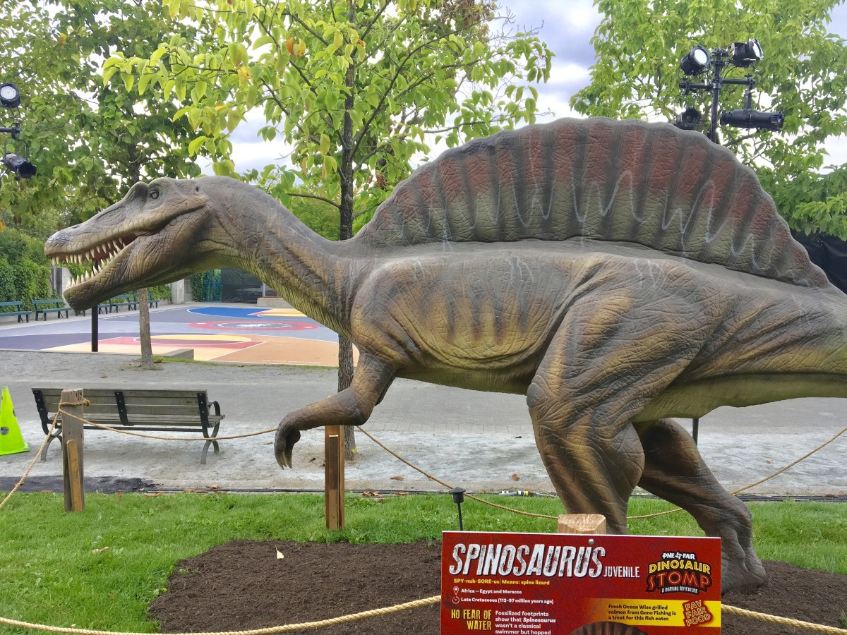A juvenile Spinosaurus beside a basketball court