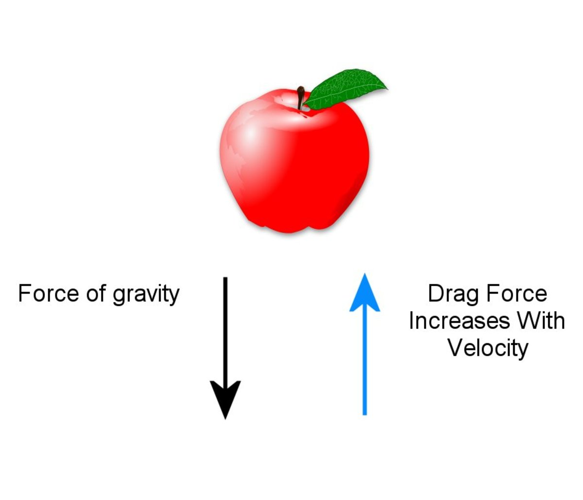 A force called drag opposes the force of gravity.
